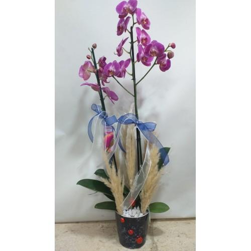 Seramikte 2 Dallı Mor Orkide